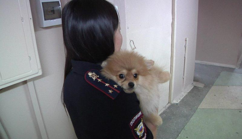 ВИркутске задержали мужчину, похитившего щенка элитной породы