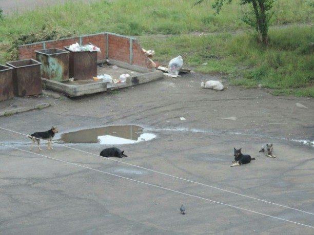 Стая бездомных собак напала надевочку имужчину вУсть-Илимске
