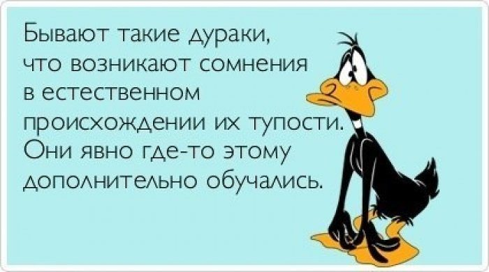 Цитаты про дураков