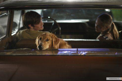 Собачья жизнь смотреть онлайн фильм целиком